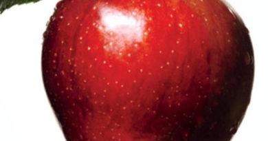 Benefits Of Organic Diet
